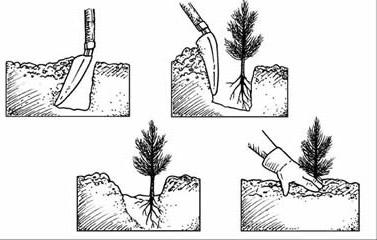 Technika sadzenia drzew